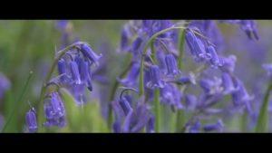 Derwentise – A Natural Partnership - Vimeo thumbnail