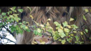 Derwentise – The Grazing Comes to Town - Vimeo thumbnail