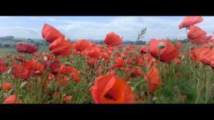 Poppies – Ledbury - Vimeo thumbnail