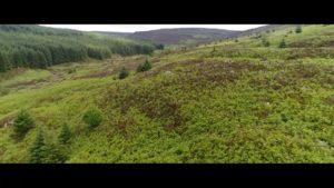 Kielderhead Wildwood (Part 1) - Vimeo thumbnail