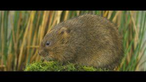 RESTORING RATTY – PART 2 - Vimeo thumbnail
