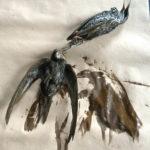 Dead swifts in the studio of artist Julian Meredith